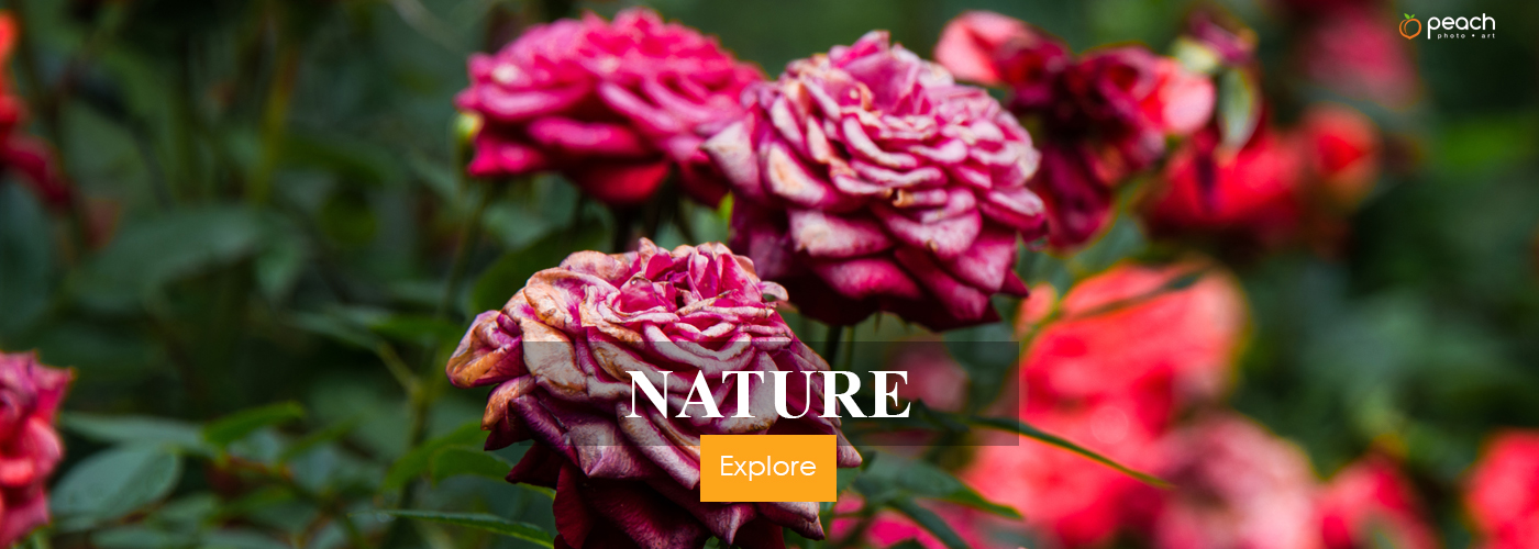BANNER-NATURE